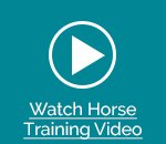 Watch Horse Training Video